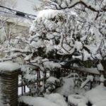 日本バッハコンクール全国大会のご報告(^o^)丿